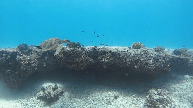GoPro 防水ハウジング ハワイ撮影